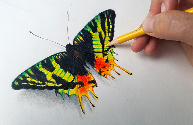 drawing with prismacolor pencils